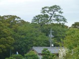 2013-10-23豊橋公園 018