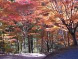 県民の森 033