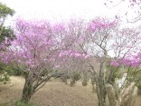 2014-4-13本宮山 051
