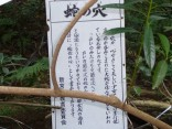 2015-2-15速玉・神倉神社~高野峠 157