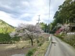 2015-4-11幸田・稲武・川向の桜と桃の花 200