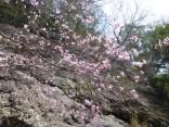 山2015-4-18鳳来寺 154