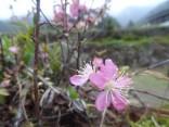 那智の滝2015-4-4.5 268