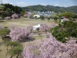 2015-4-11幸田・稲武・川向の桜と桃の花 028