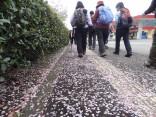 那智の滝2015-4-4.5 173