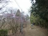 2015-4-12本宮山 036