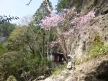 山2015-4-18鳳来寺 153