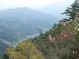 山2015-4-18鳳来寺 289