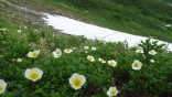 立山 193 チングルマ