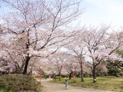豊橋公園 080