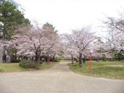 豊橋公園 052