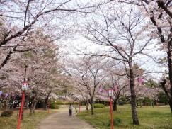 豊橋公園 055
