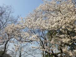 3-23豊橋公園 011