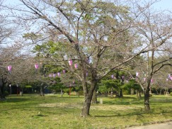 3-23豊橋公園 066