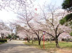 豊橋公園 040