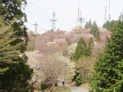 本宮山4-16 053