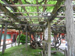 2016-5-15奈良・春日山 238