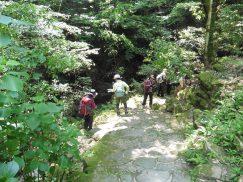2016-5-15奈良・春日山 141
