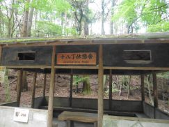 2016-5-15奈良・春日山 185