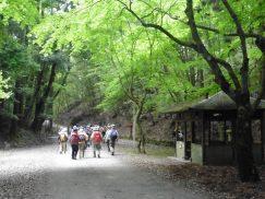 2016-5-15奈良・春日山 184