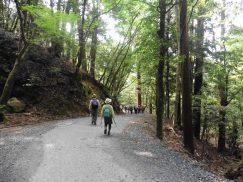 2016-5-15奈良・春日山 179