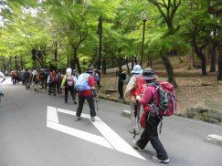 2016-5-15奈良・春日山 224