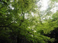 2016-5-15奈良・春日山 210