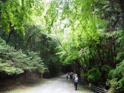 2016-5-15奈良・春日山 105