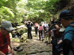 2016-5-15奈良・春日山 053