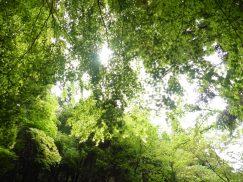 2016-5-15奈良・春日山 106