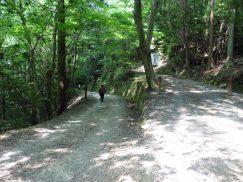 2016-5-15奈良・春日山 125
