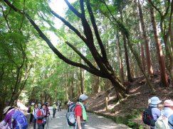 2016-5-15奈良・春日山 170