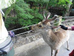 2016-5-15奈良・春日山 219