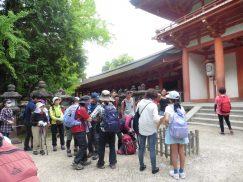 2016-5-15奈良・春日山 246