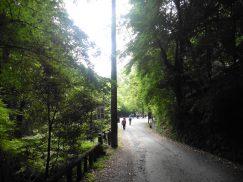 2016-5-15奈良・春日山 211