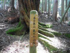 2016-5-15奈良・春日山 166