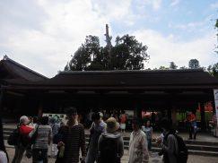 2016-5-15奈良・春日山 244