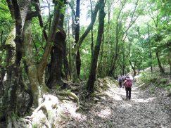 2016-5-15奈良・春日山 023