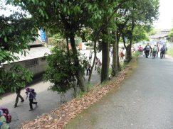 2016-5-15奈良・春日山 014