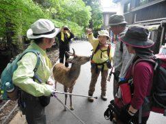 2016-5-15奈良・春日山 217