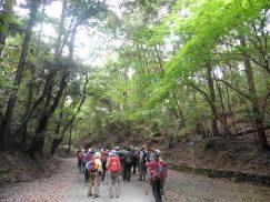 2016-5-15奈良・春日山 186