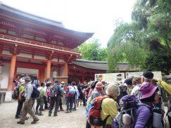 2016-5-15奈良・春日山 247