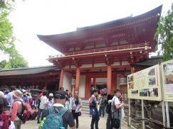 2016-5-15奈良・春日山 245