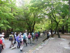 2016-5-15奈良・春日山 222