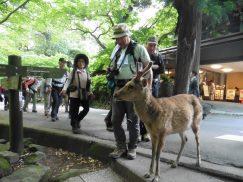 2016-5-15奈良・春日山 227