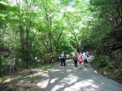 2016-5-15奈良・春日山 198