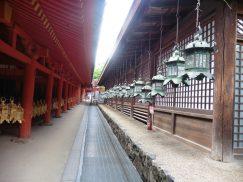 2016-5-15奈良・春日山 236