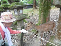 2016-5-15奈良・春日山 230
