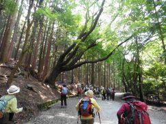 2016-5-15奈良・春日山 164