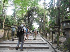 2016-5-15奈良・春日山 229